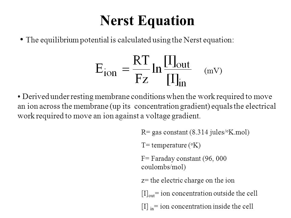 Nerst Equation The equilibrium potential is calculated using the Nerst equation: (mV)