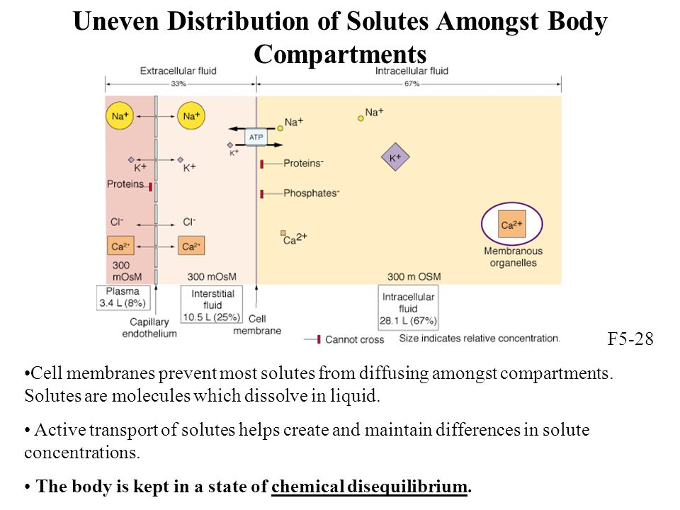 Uneven Distribution of Solutes Amongst Body Compartments