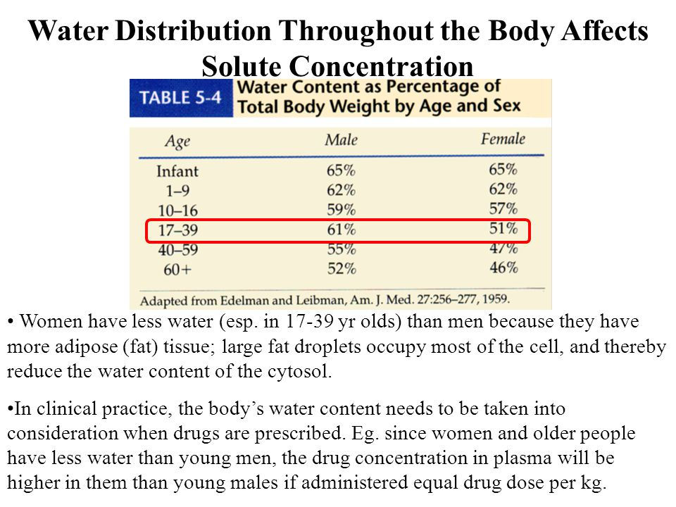Water Distribution Throughout the Body Affects Solute Concentration
