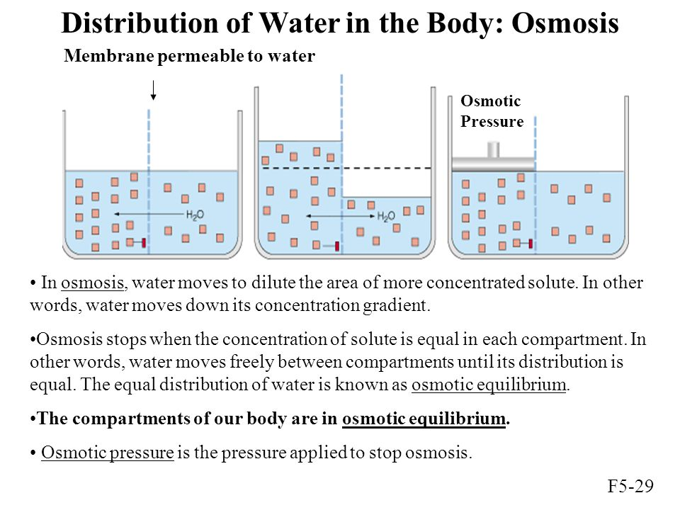 Distribution of Water in the Body: Osmosis