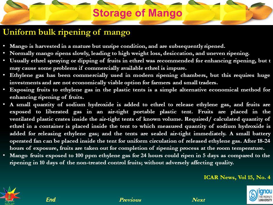 Uniform bulk ripening of mango