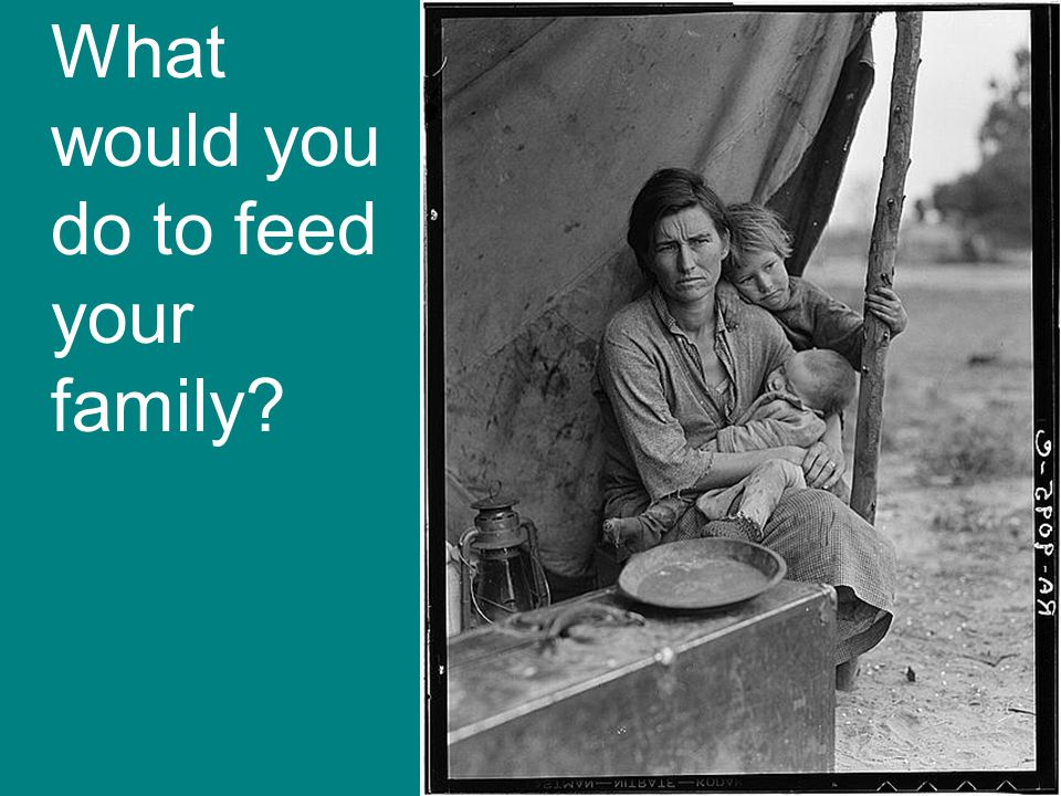 What would you do to feed your family