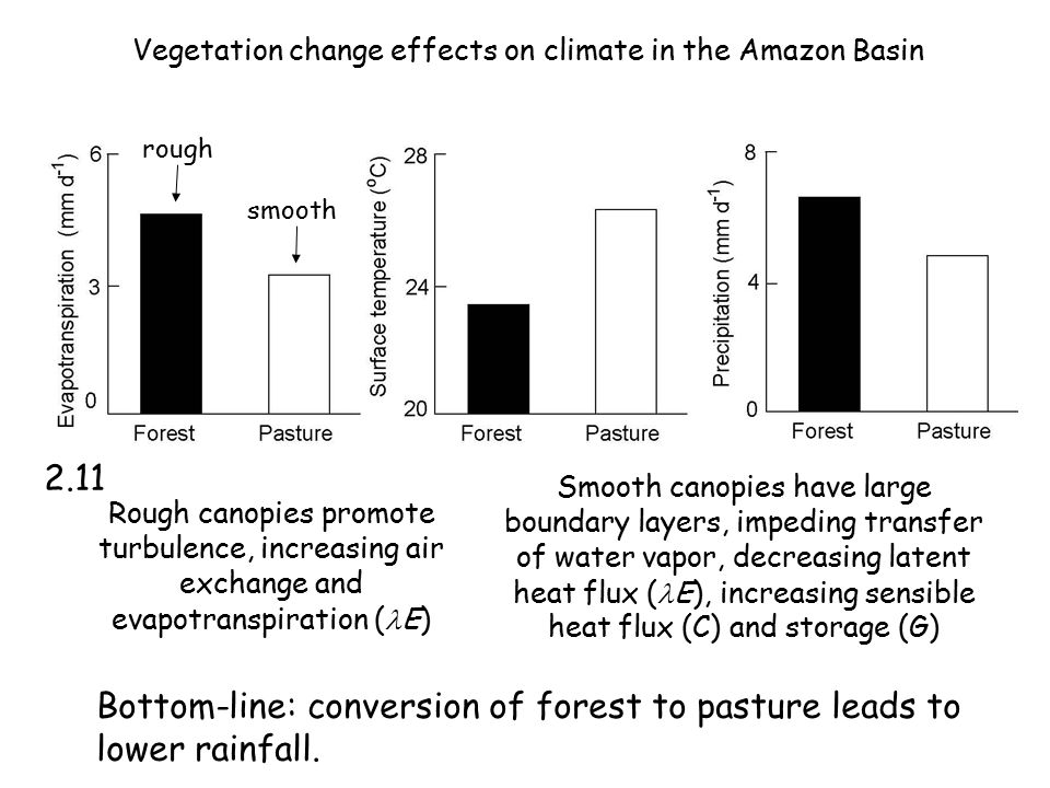 Vegetation change effects on climate in the Amazon Basin