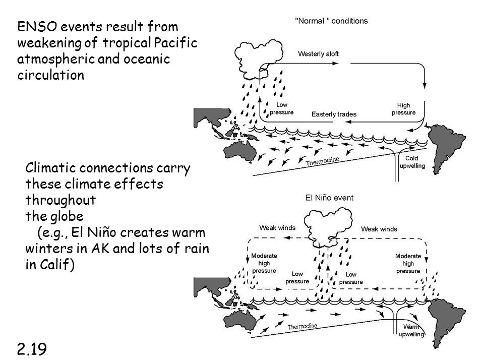 ENSO events result from weakening of tropical Pacific atmospheric and oceanic circulation