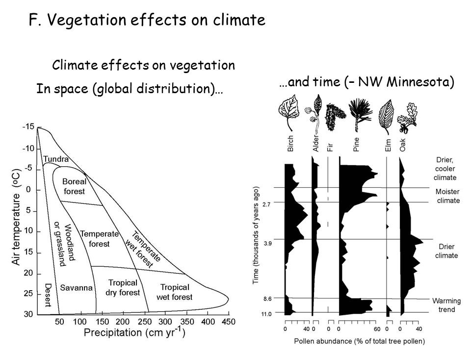 Climate effects on vegetation