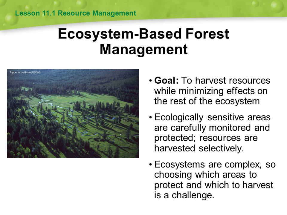 Forest Resource Management : Forestry and resource management ppt download