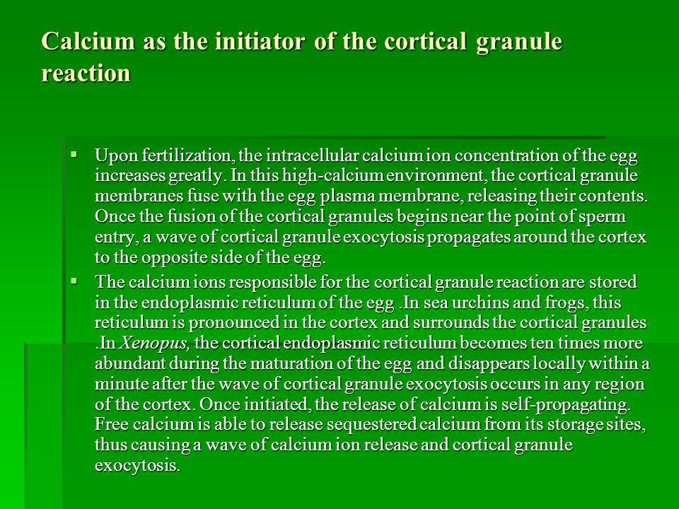 Calcium as the initiator of the cortical granule reaction
