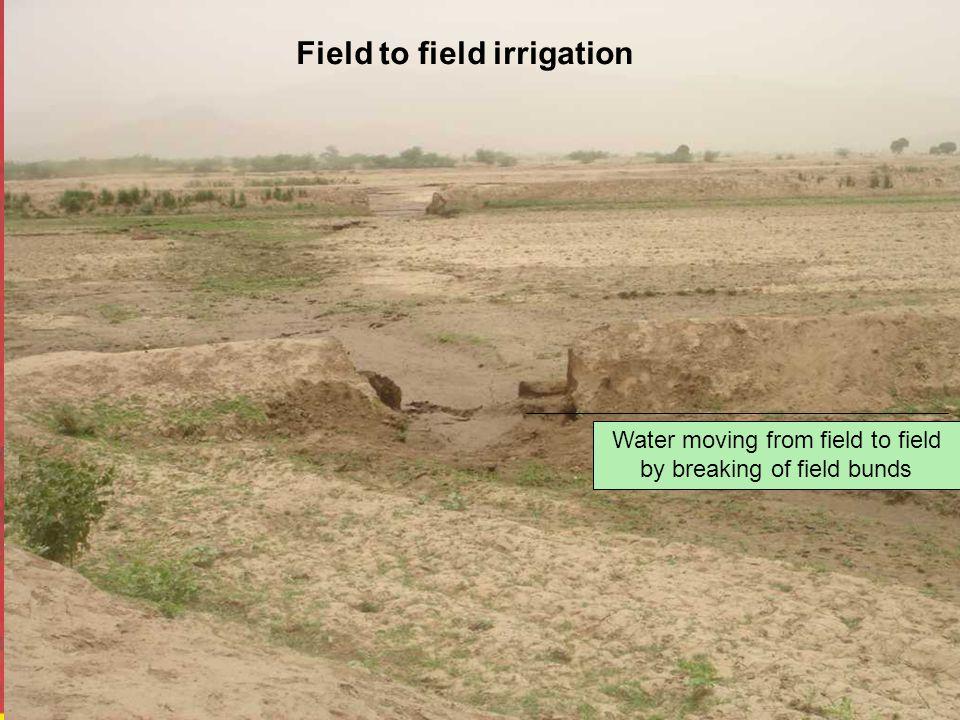 Water moving from field to field by breaking of field bunds