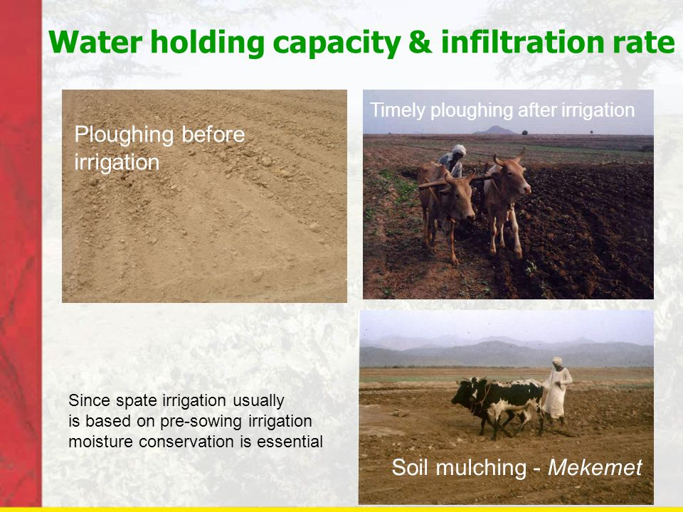 Water holding capacity & infiltration rate