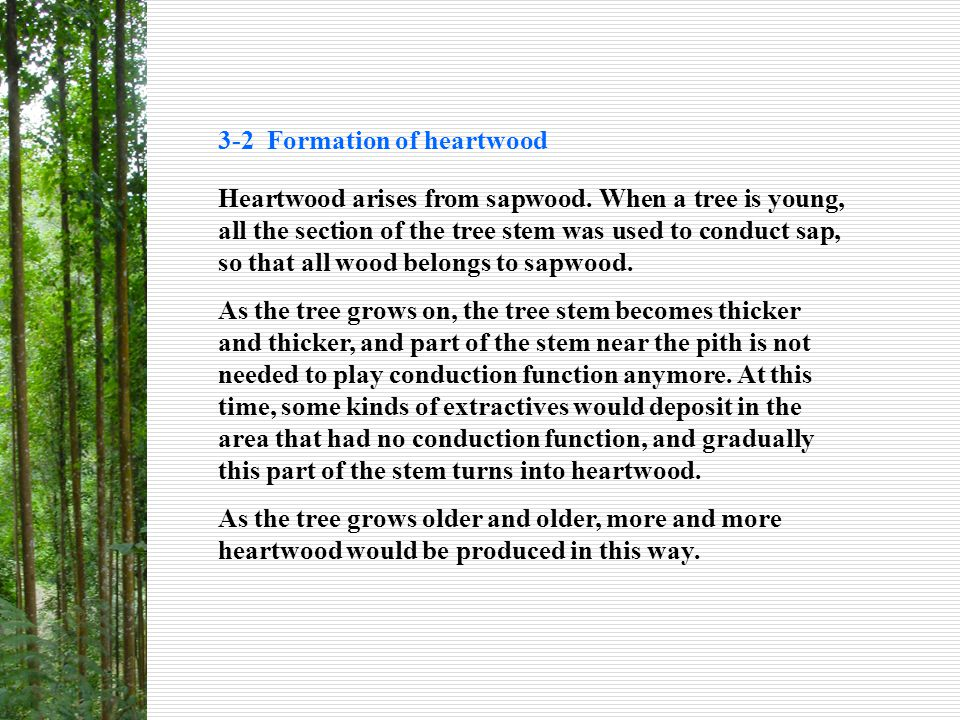 3-2 Formation of heartwood