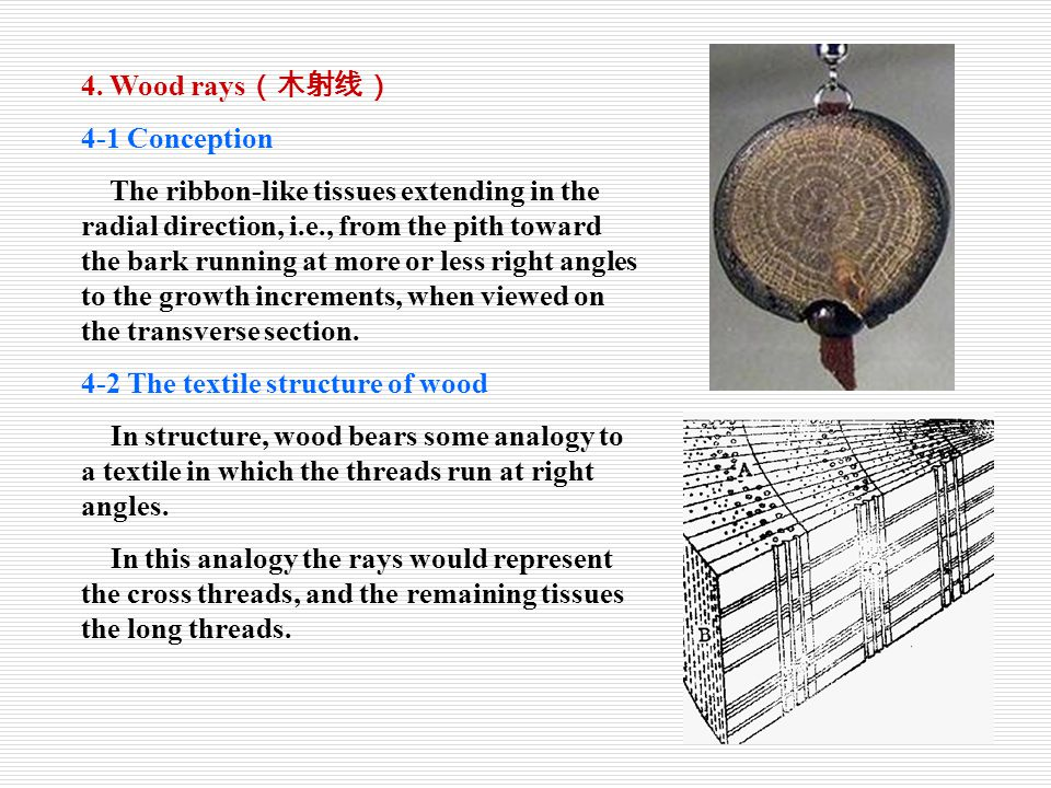 4. Wood rays(木射线) 4-1 Conception.