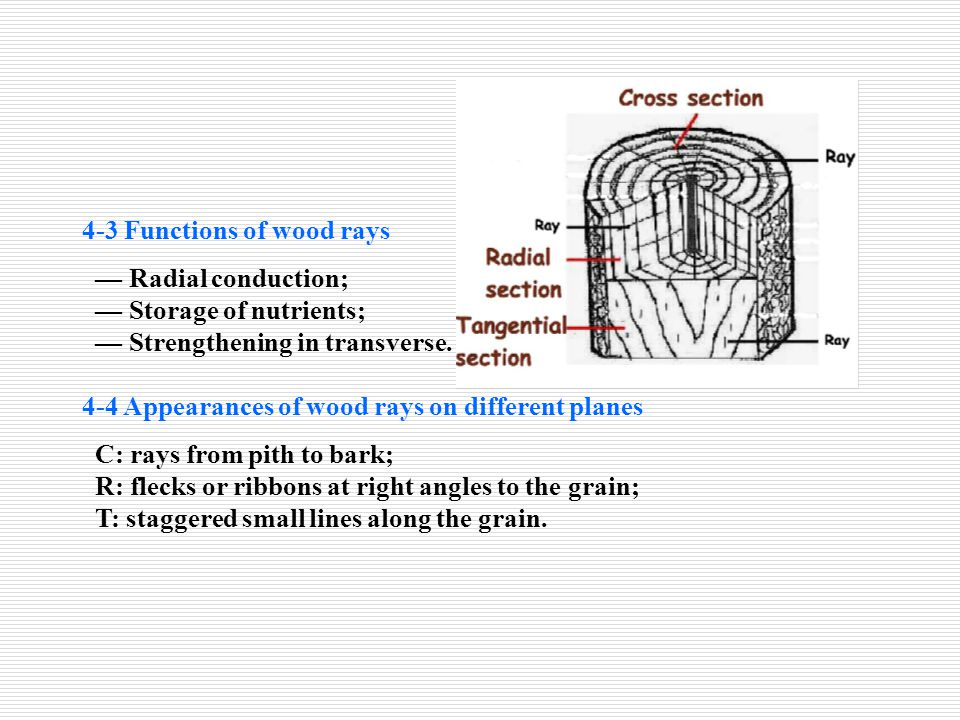 4-3 Functions of wood rays