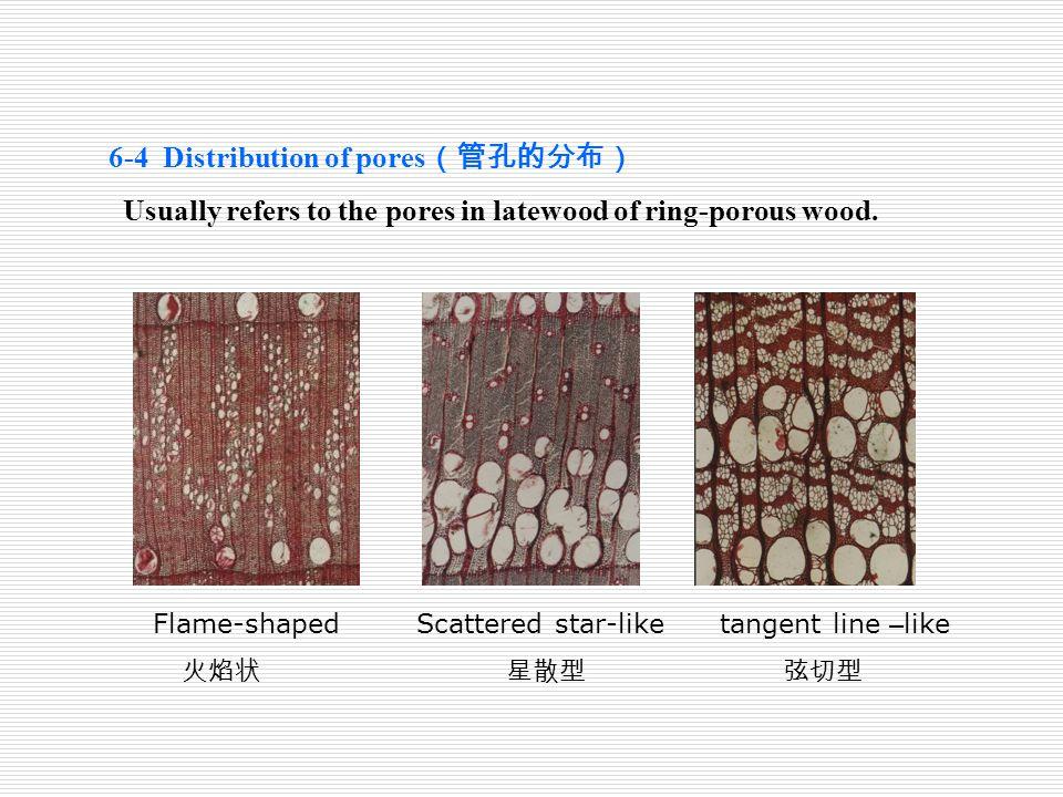 6-4 Distribution of pores(管孔的分布)