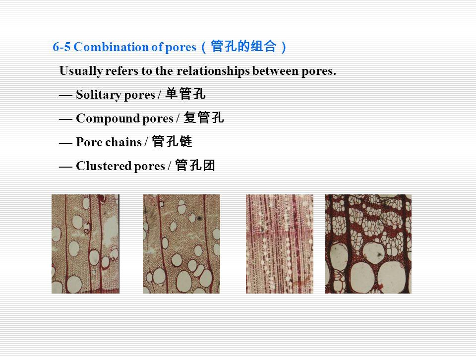 6-5 Combination of pores(管孔的组合)