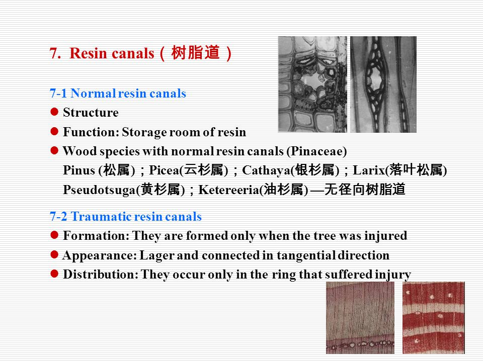 7. Resin canals(树脂道) 7-1 Normal resin canals Structure