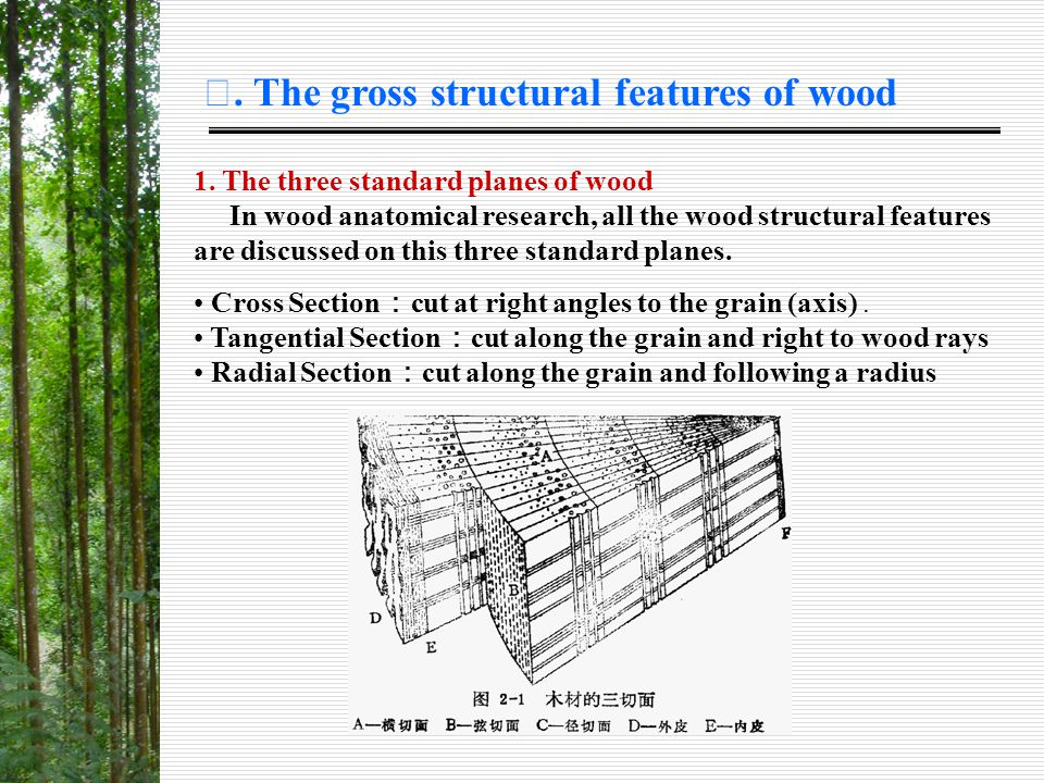 Ⅱ. The gross structural features of wood