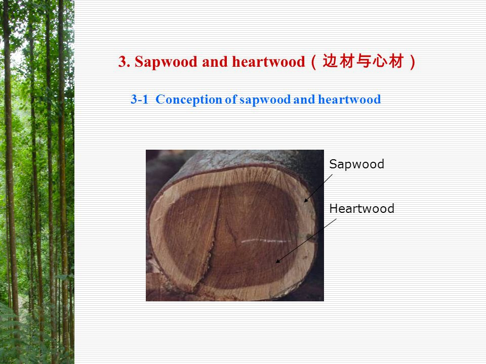 3. Sapwood and heartwood(边材与心材)