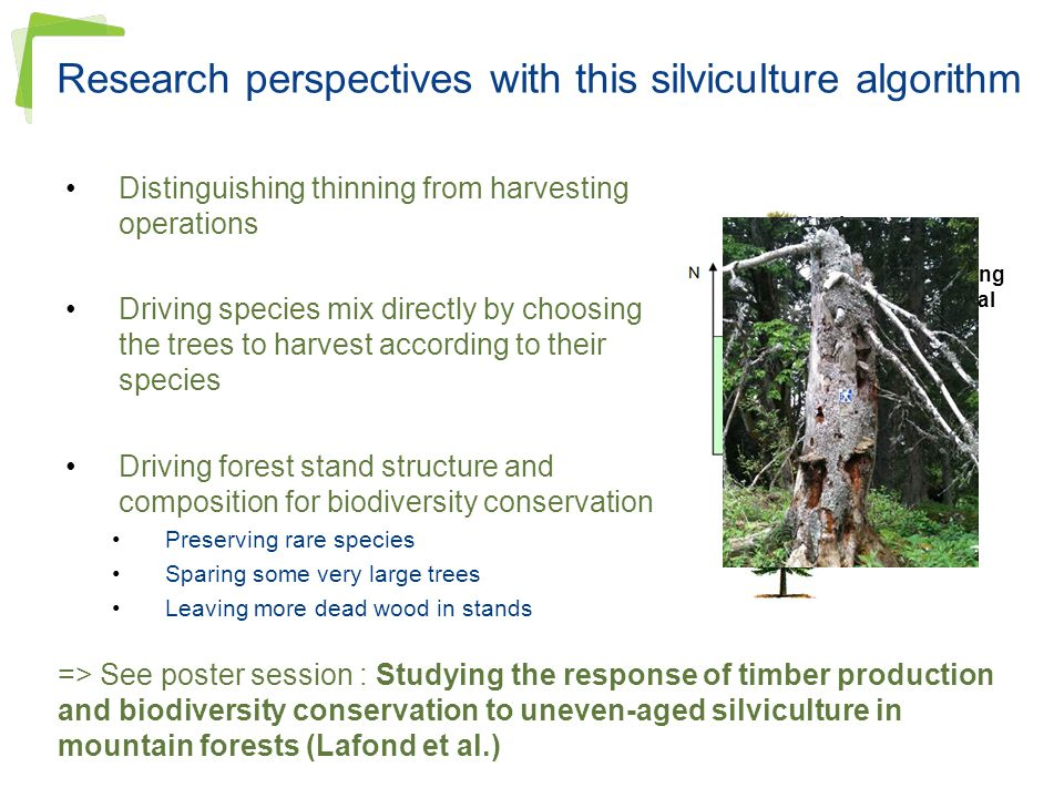 Research perspectives with this silviculture algorithm