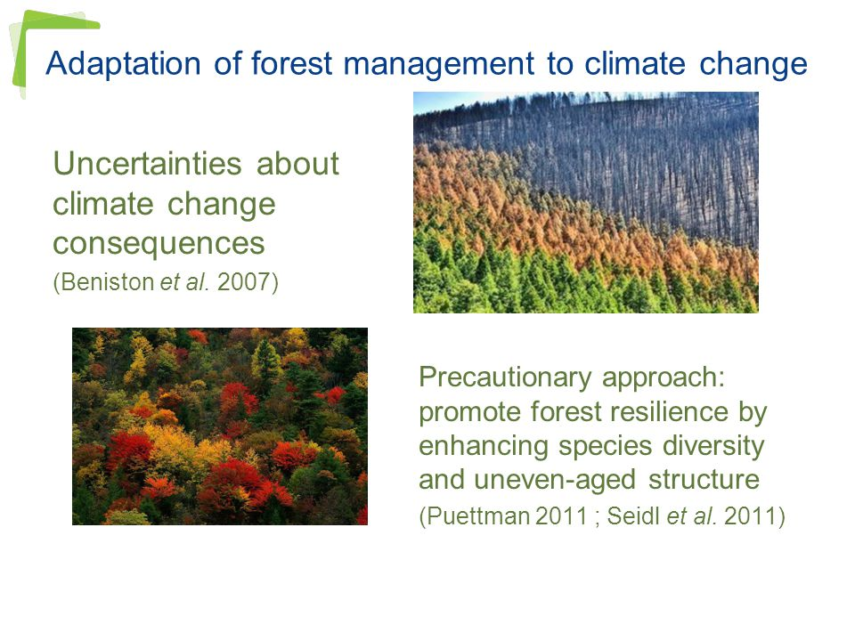 Adaptation of forest management to climate change