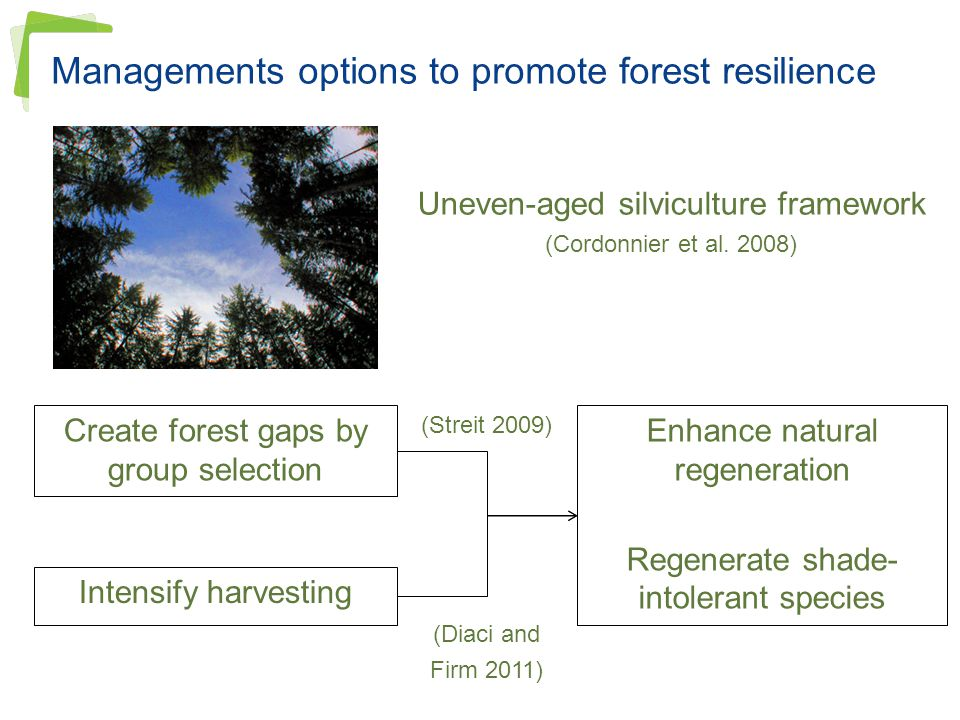 Managements options to promote forest resilience