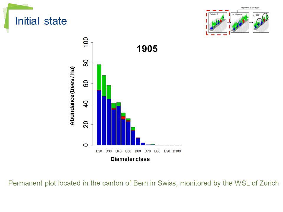 Initial state Diameter class. Abundance (trees / ha) 1905.