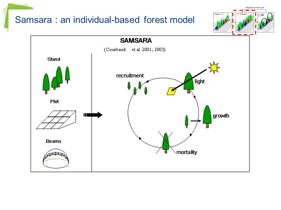 Samsara : an individual-based forest model