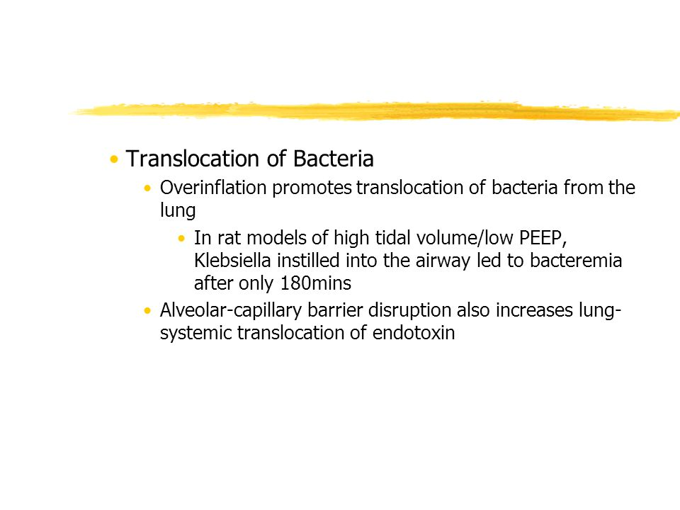 Translocation of Bacteria