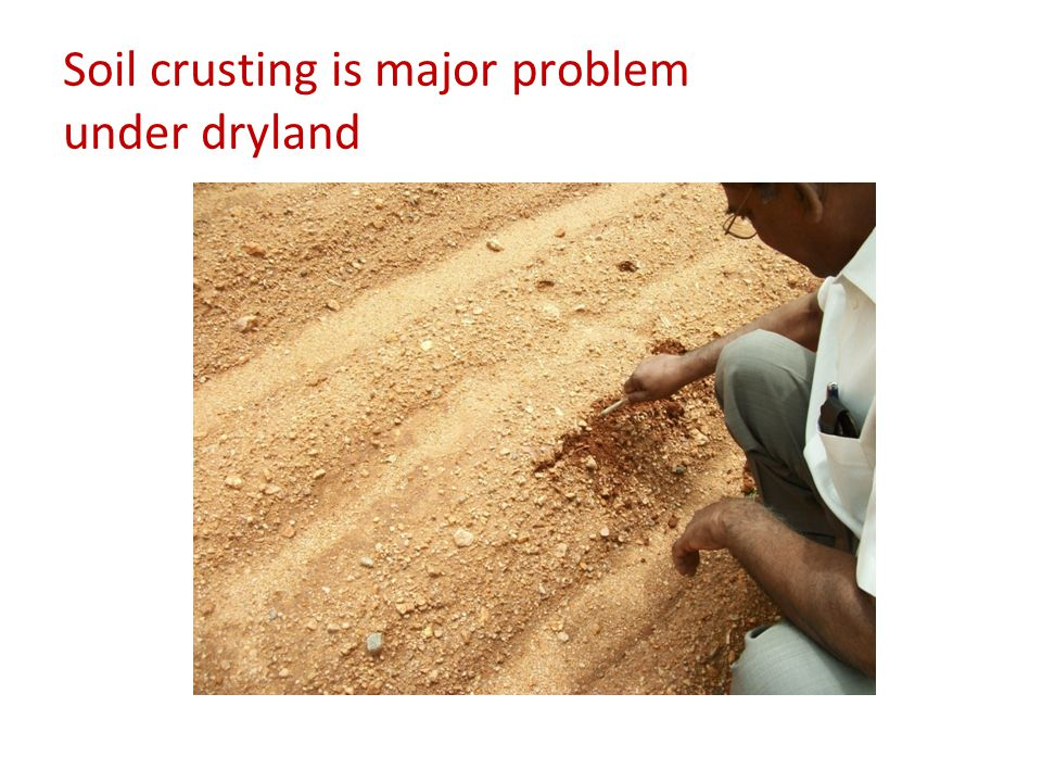 Soil crusting is major problem under dryland