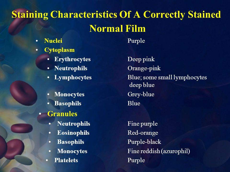Staining Characteristics Of A Correctly Stained Normal Film