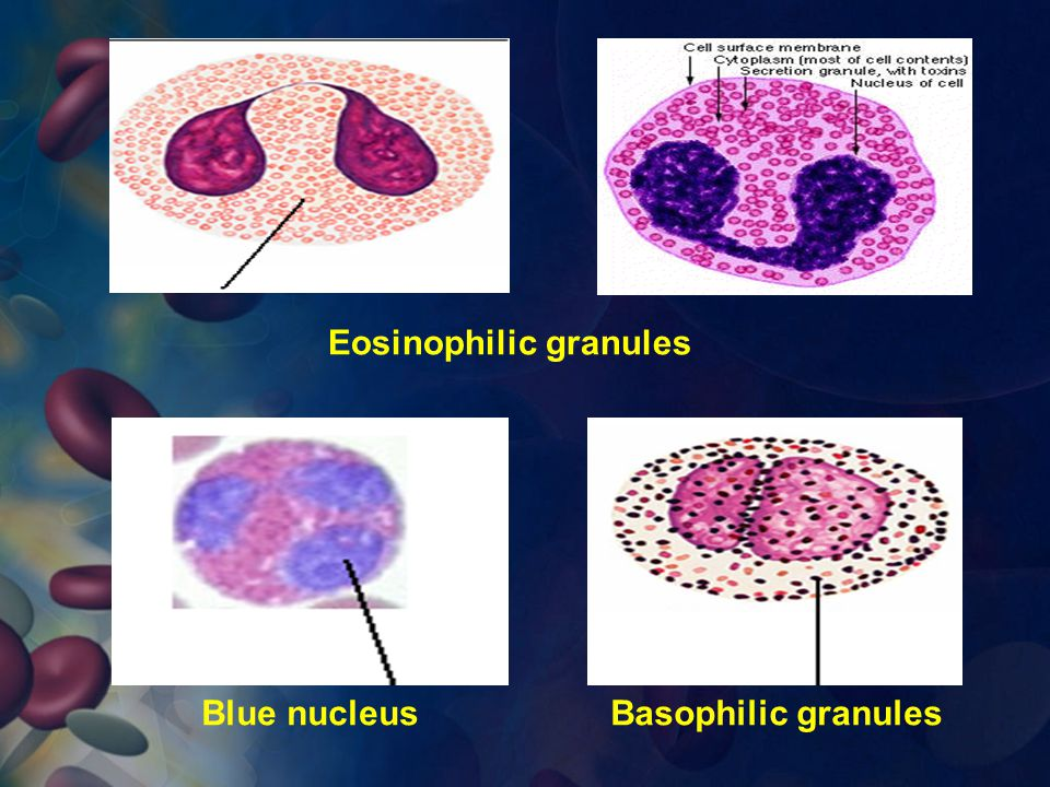 Eosinophilic granules