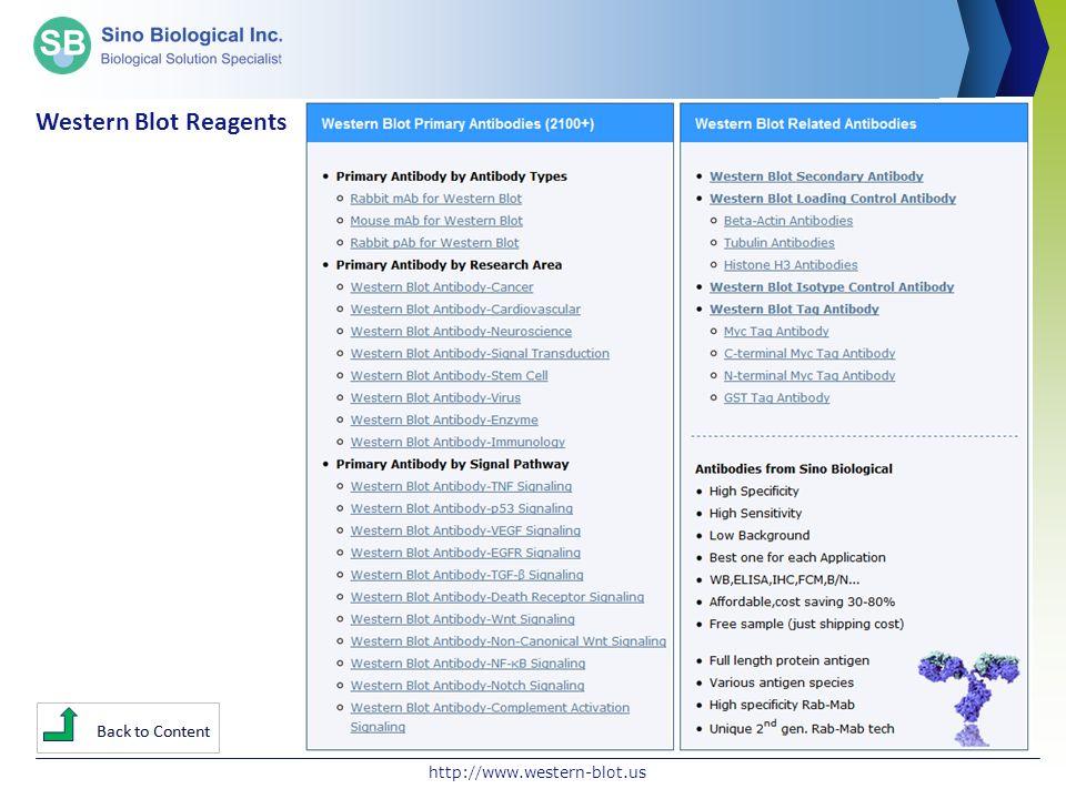 Western Blot Reagents http://www.western-blot.us