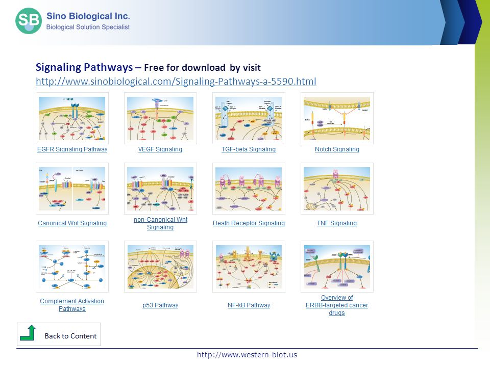 Signaling Pathways – Free for download by visit