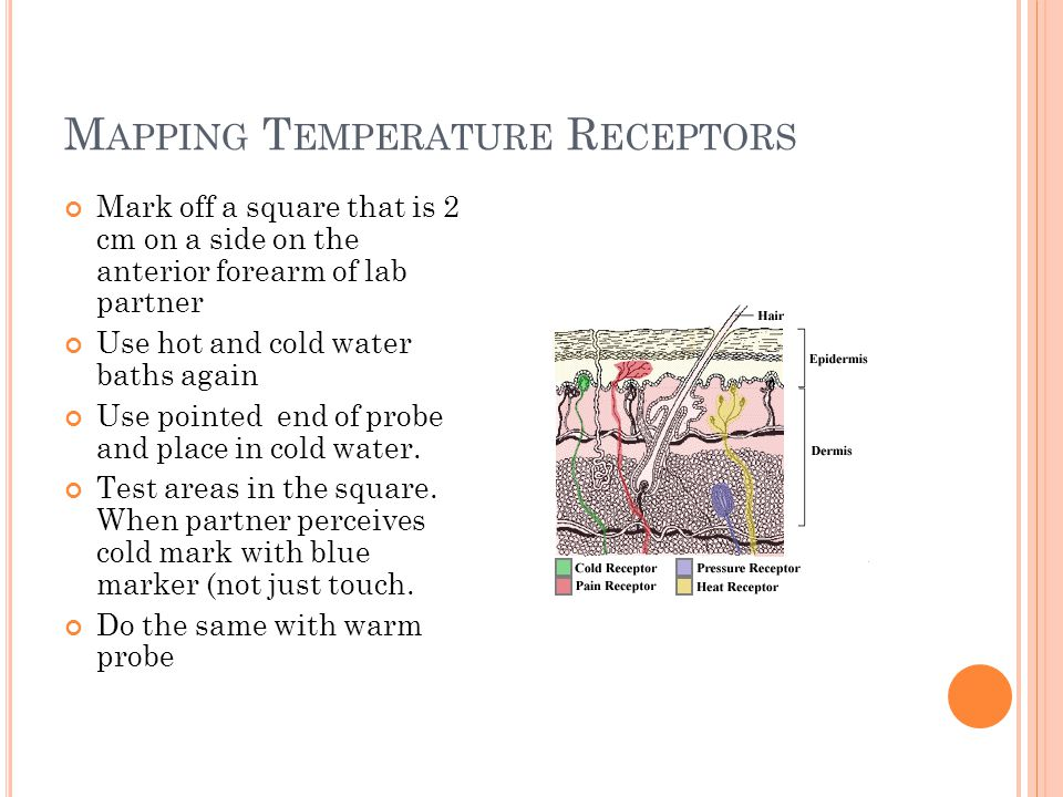 Mapping Temperature Receptors