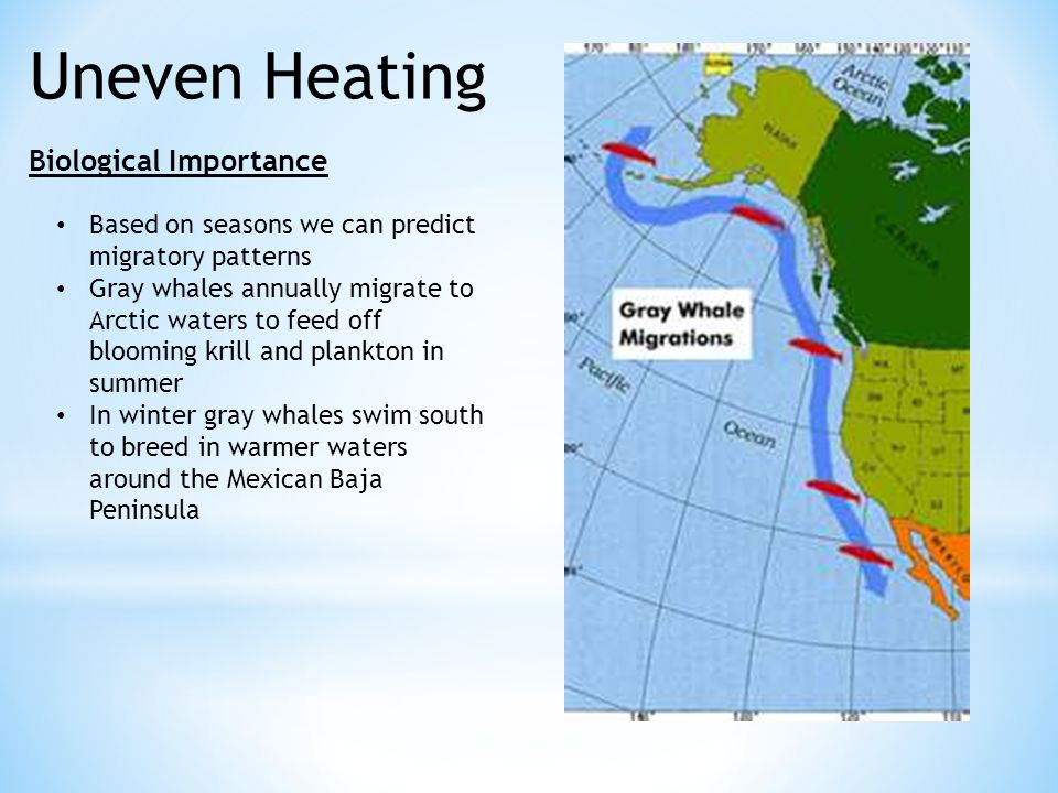 Uneven Heating Biological Importance