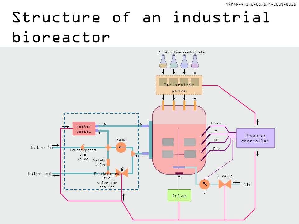 Structure of an industrial bioreactor
