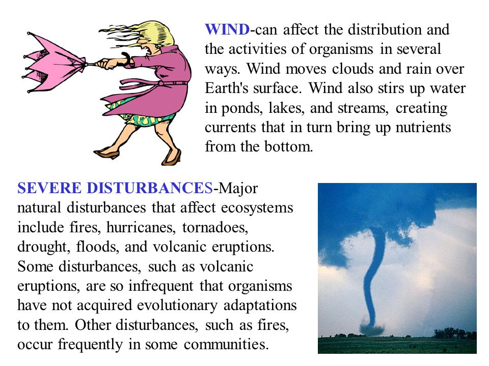 WIND-can affect the distribution and the activities of organisms in several ways. Wind moves clouds and rain over Earth s surface. Wind also stirs up water in ponds, lakes, and streams, creating currents that in turn bring up nutrients from the bottom.