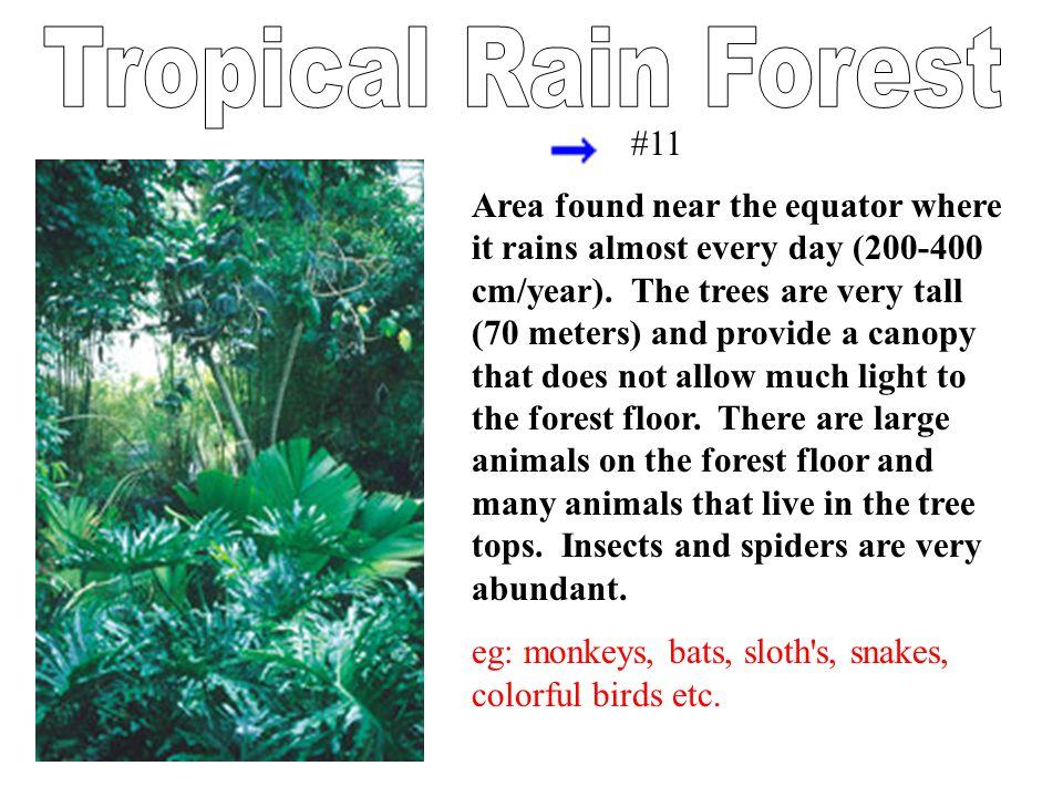 Tropical Rain Forest #11.