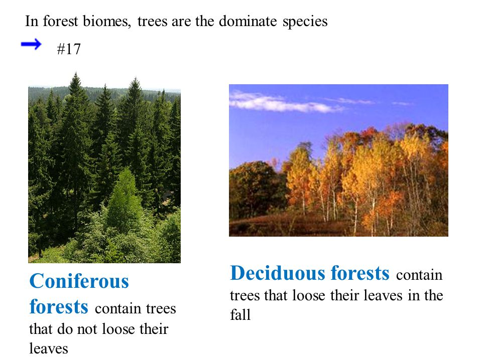 Deciduous forests contain trees that loose their leaves in the fall