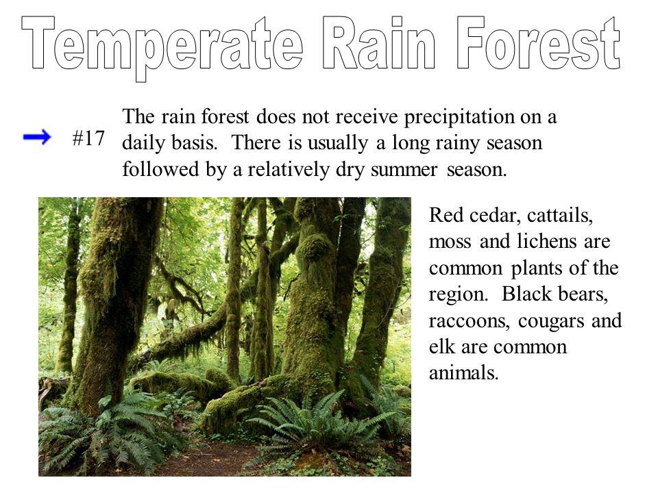 Temperate Rain Forest