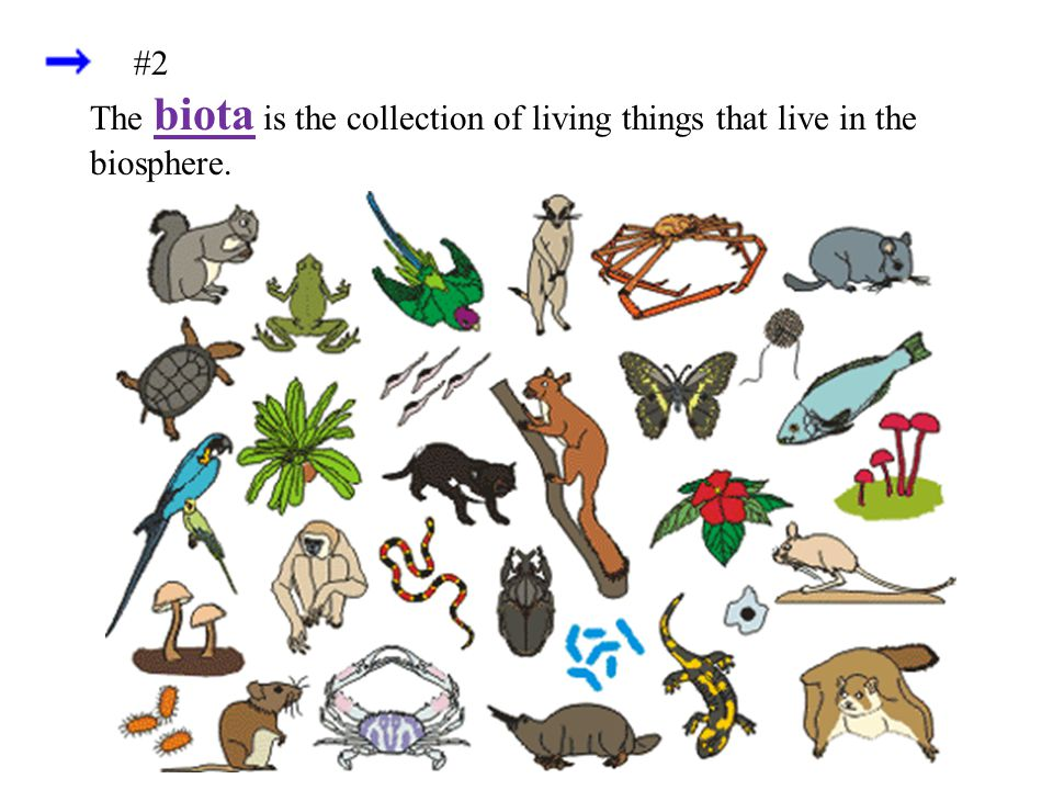 #2 The biota is the collection of living things that live in the biosphere.