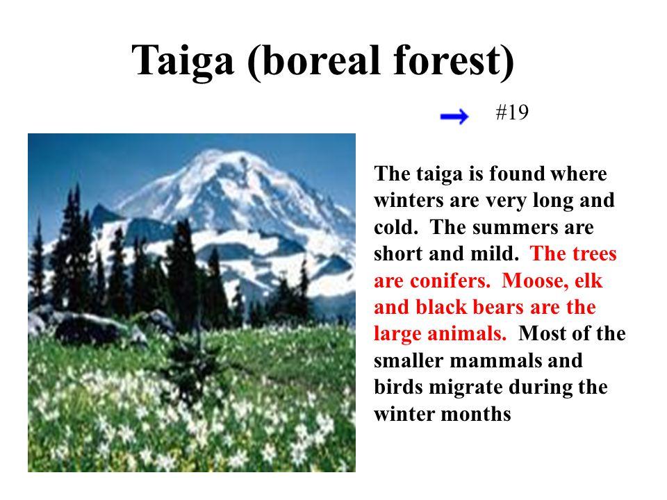 Taiga (boreal forest) #19