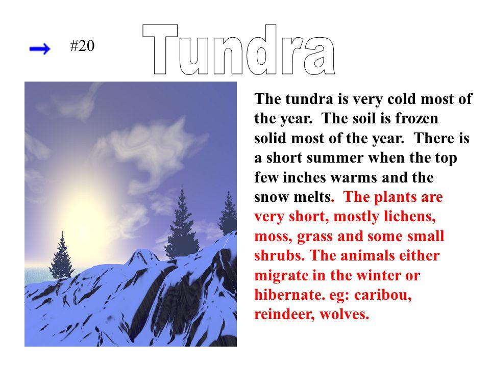 Tundra #20.