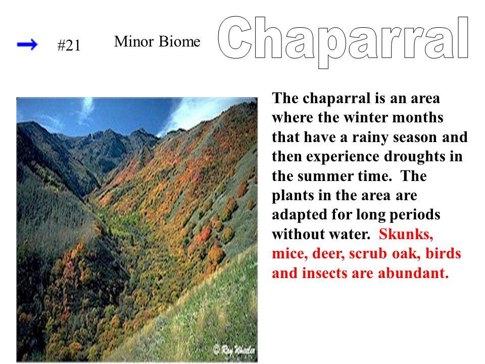 Chaparral Minor Biome #21