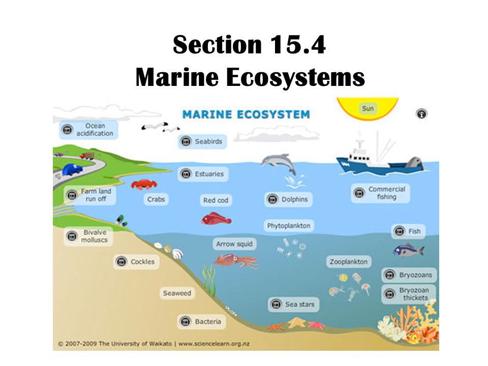 Section 15.4 Marine Ecosystems