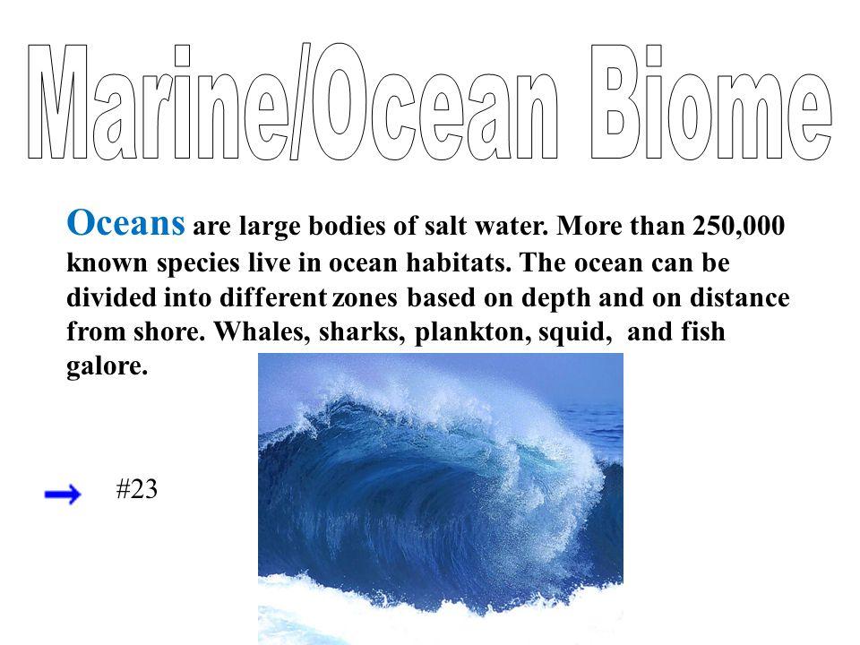 Marine/Ocean Biome