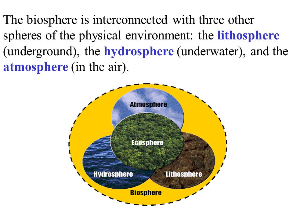 The biosphere is interconnected with three other spheres of the physical environment: the lithosphere (underground), the hydrosphere (underwater), and the atmosphere (in the air).