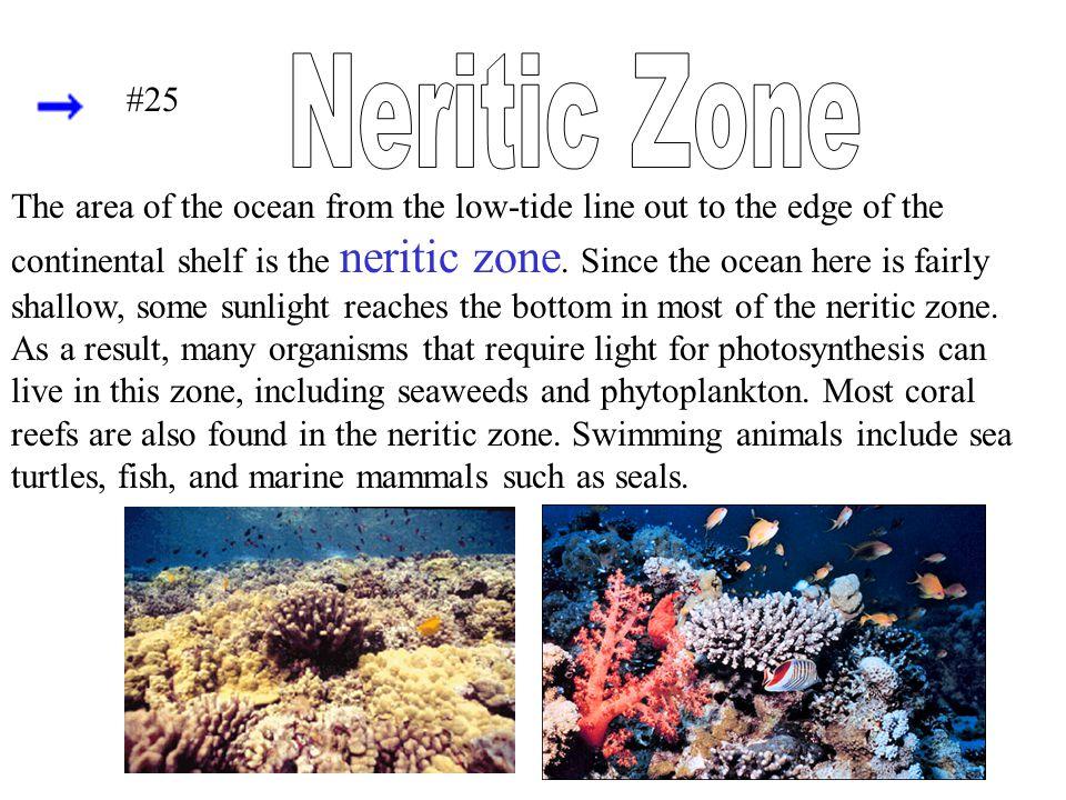 Neritic Zone #25.