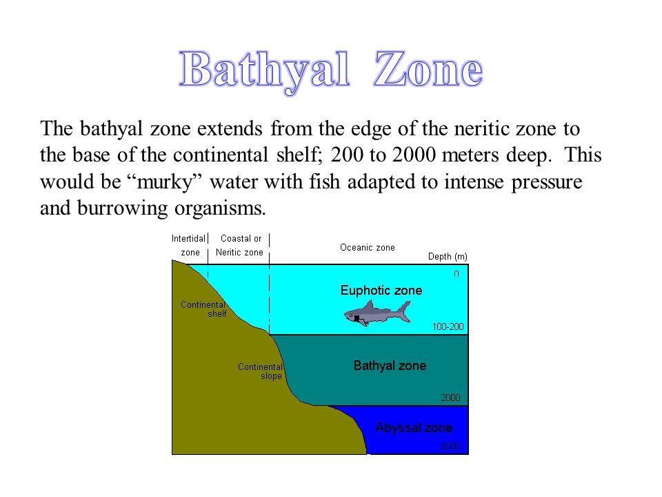 Bathyal Zone