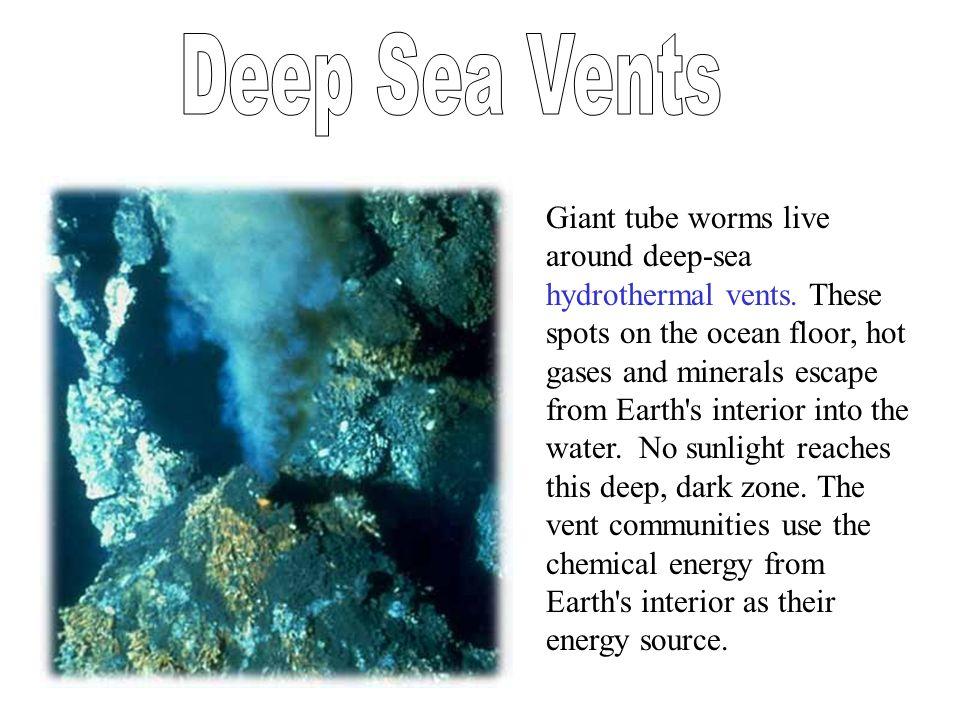 Deep Sea Vents