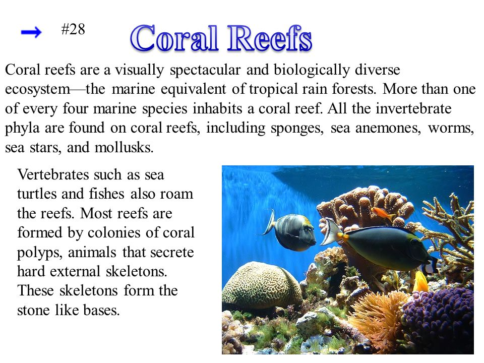 Coral Reefs #28.